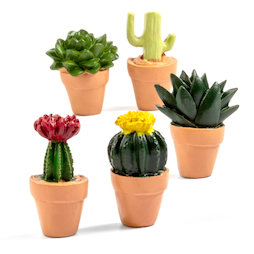 LIV-131, Cactus, magneti decorativi a forma di cactus, set da 5